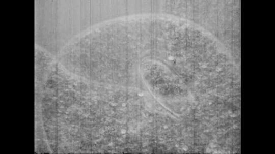 1950s: UNITED STATES: amoeba seen through microscope. Pond water sample seen under microscope