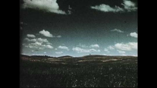 1950s: Long shot of grassland. Hawk flying overhead.