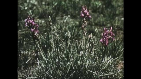 1950s: Close up shots of wildflowers. Bird in grass. Long shot of bird flying. Bird in grass. Close up of grasshopper. Ants swarming.