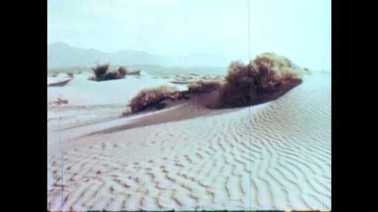 1950s: Vegetation in sand dunes in the desert. Plants and flowers move in the wind in the desert.