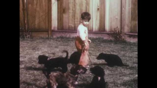 1950s: Young boy holds multiple puppies on leashes. Mother reaches out to help toddler with leashes. Mother holds multiple puppies on leashes. Mother and child kneel down to pet puppies.