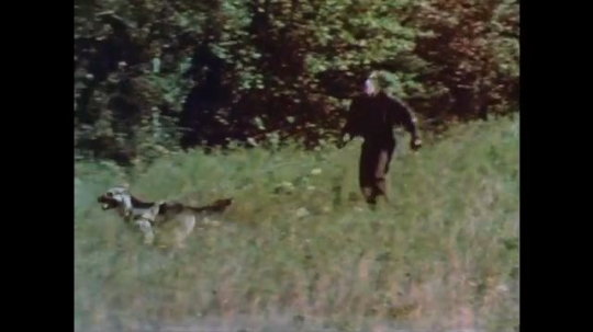 1960s: Officer and dog run through woods.  Dog jumps and bites man's arm.  Dog searches field.