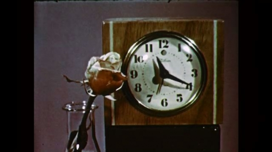 1950s: UNITED STATES: time lapse of rose blooming next to clock. Face of clock