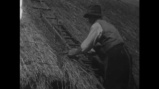 1950s: Men work in a peat bog.  Men cut peat turf. Man cuts peat with his foot and a slean.