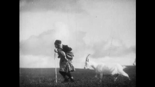 1950s: FINLAND, EUROPE: Lady walks with goats. Close up of soft boats on girl. Girl carries dog in backpack. Girl with pet goat