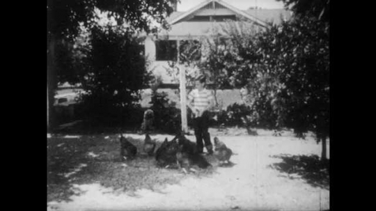 1950s: Boy tosses feed to chickens in yard. Dog watches boy and chickens. Chickens eat feed tossed by boy.