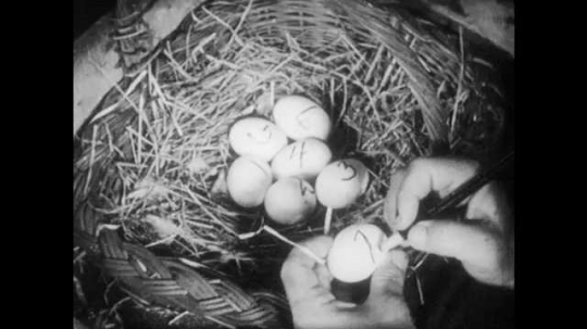1950s: Hand uses pencil to number eggs. Man hands pencil to boy and speaks. Man and boy talk. Hand picks up egg and marks egg with pencil.