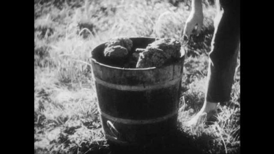 1940s: Children fill bucket with buffalo chips, carry bucket away. Men harvest corn stalks in field.