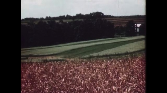 1940s: Farms and fields with trees around.