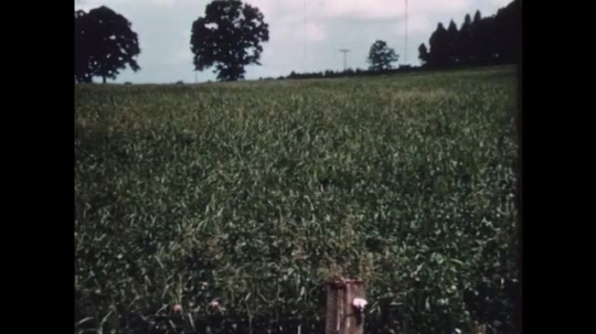 1940s: Field with trees. Man inspects soil and plantation.