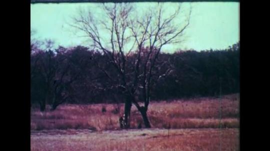 1950s: Long shot, boy waving by tree. Rabbit hopping. Man aims rifle. Rabbit hopping, drops from gun shot. Man walking in woods, aims gun. Man aiming gun.