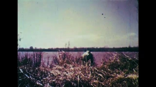 1950s: Long shot, man walks up hill, waves arm. Cans fall into water, bullets shoot into water.