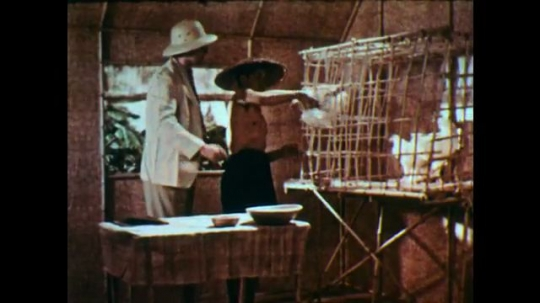 1950s: Man with straw hat grabs chicken from cage, hands to suited man. Man inspects, hands back to companion who puts it in cage. Man mixes bowl, hands to companion, who empties bowl in cage.