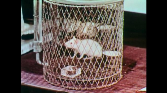 1950s: Rat in cage. Man drips dropper into small container, places into rat cage. Man writes in book. View of words in book, describes necessity of accessory for a diet. Man works in lab.