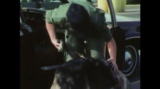 1970s: Woman in uniform stands next to car, pets German shepherd police dog. Woman unlocks padlock on locker, places items into small lock box.