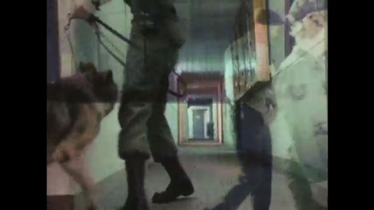 1970s:  Woman officer guides search dog down hallway. Dog sniffs along hallway.