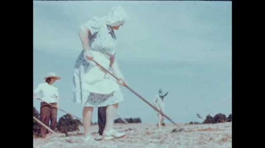 1940s: UNITED STATES: lady works in field. Man ploughs soil. Cotton plants in field. Baby sucks finger