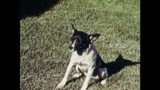 1950s: Skipper the dog chases three dogs away. Skipper walks back to the porch to wait for a more acceptable friend.