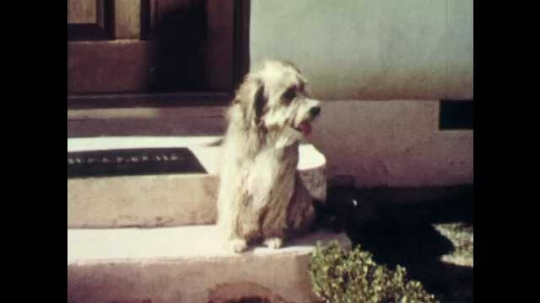 1950's: Skipper the dog waits on the stoop for dog friends. Skipper runs away from the stoop.