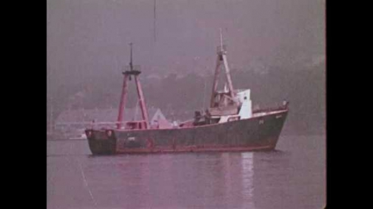 1950s CANADA: ship in harbour. Fisherman inspects nets on boat. Man hauls in fish in net
