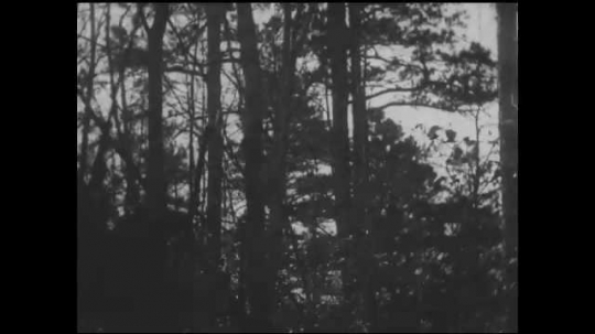 1930s: UNITED STATES: man rides horse through trees. Men on horses meet in forest.