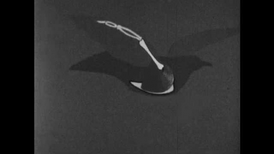 1950s: Illustration of seagull