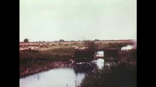 1940s: River. Water flows through irrigation canal on farm. Sheep graze. Irrigated field.