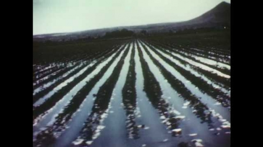 1940s: Irrigated field of crops. Animated map of the united states of america, lines representing flow of water.