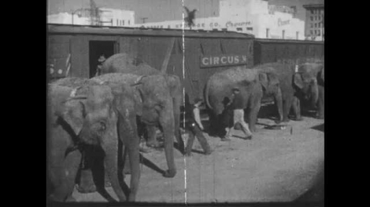 1950s: UNITED STATES: men work with elephants outside box car. Trainer brings pony from train carriage