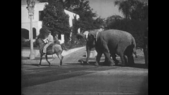 1950s: UNITED STATES: elephants walk from train to circus ground through street. Man rides elephant through street