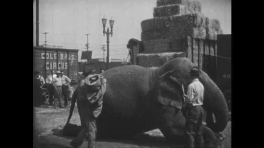 1950s: UNITED STATES: men clean elephant. Man puts circus blanket on elephant.