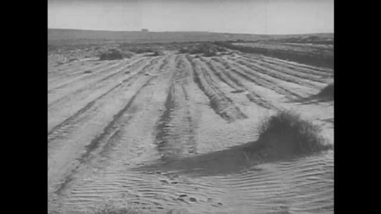 1940s: UNITED STATES: dust cover over farm land. Orange grove on farm. Walnut grove in valley