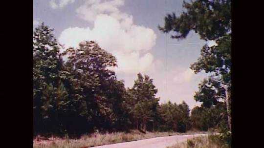 1970s: UNITED STATES: road through forest in Alabama. Rubbish on side of road