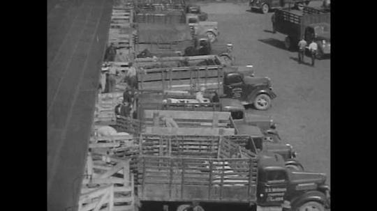 1950s: Men unload cattle from trucks. Cattle and sheep navigate series of corrals. Man herds cattle through pen. Men saw and carry beef carcasses. Selection of meats on display.