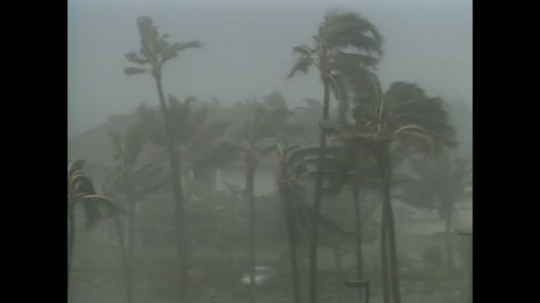UNITED STATES: 1990s: palm trees in hurricane. Waves during storm. Computer simulation of wind in hurricane. Steering winds.