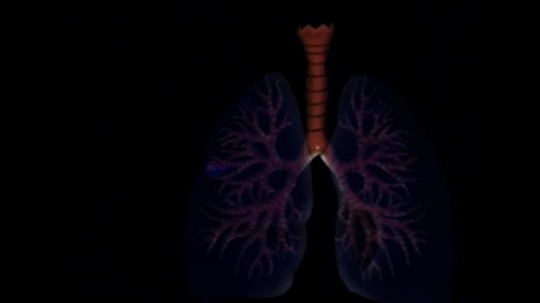 UNITED STATES: 1990s: computer simulation of human lung and gas exchange.