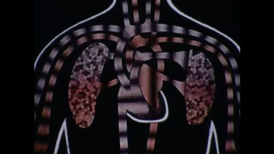 United States: 1970s: close up animation of blood flow to lungs and heart.