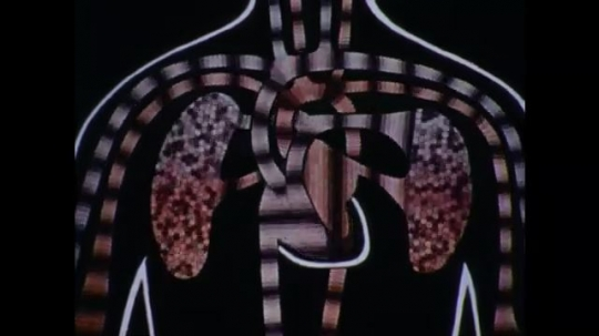 United States: 1970s: close up animation of blood flow to lungs and heart. Man cuts away trousers around leg wound.