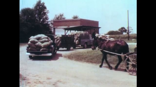 UNITED STATES: 1960s: horse pulls lady and cart. Man shows pepper crop to buyer.