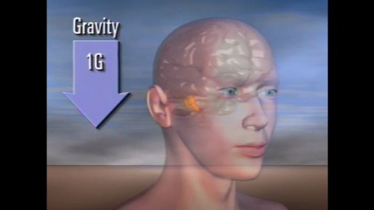 UNITED STATES: 1980s: computer model shows impacts of gravity on human brain.