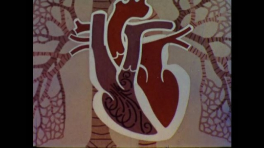 United States: 1960s: animation of valves as they open and close with blood flow in heart