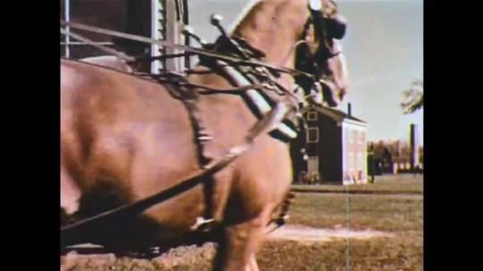 UNITED STATES: 1950s: horse and cart in town. Man files horse shoe. Motor car steering wheel.