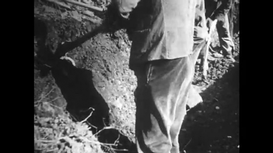 GERMANY: 1920s: men dig holes in soil. Man uses pick axe on soil. Trench building