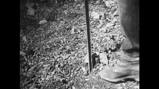 GERMANY: 1920s: worker makes hole in ground for grape vine.