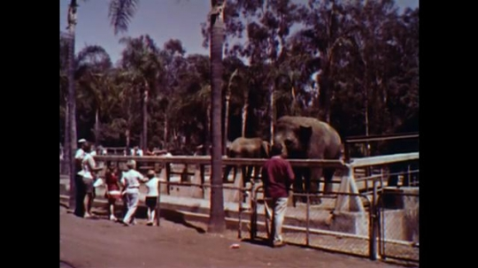 United States: 1960s: people at elephant enclosure at zoo. People at beach. Ladies board bus. Women fold sheets. Women sort clothes. Thrift shop door.