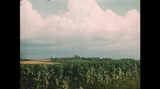 United States: 1950s: Clouds over crops in field. Lady takes meat from oven. Cowboy moves cattle