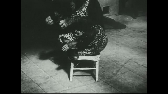 UNITED STATES 1940s: Chimpanzee in chair takes off shoes.