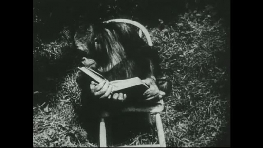 UNITED STATES 1940s: Orangutan in chair, looks at book / at table next to girl, drinks from watering can.