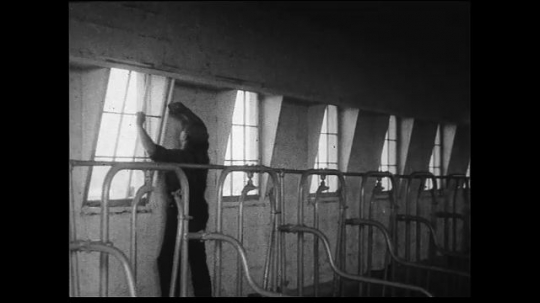 UNITED STATES 1930s: Medium wide to wide shot of farmworker opening windows in dairy barn cuts to shot of metal roof.