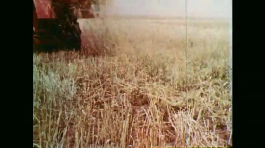 1950s: Combine harvests wheat. Wheat stalks blowing. Grain pours from chute. Truck with grain. Boy driving truck. Man dumps grain. Silos. Combine turning. Combine drives through field.